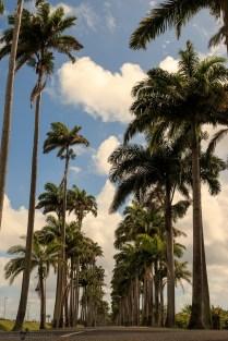 nature_Guadeloupe-2019-132