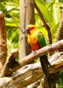 nature_Guadeloupe-2019-33