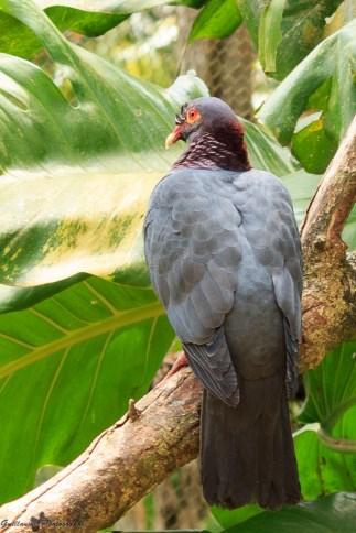nature_Guadeloupe-2019-34