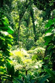 nature_Guadeloupe-2019-35