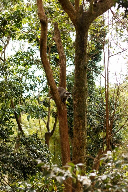 nature_Guadeloupe-2019-58
