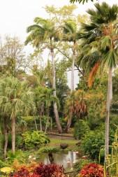 nature_Guadeloupe-2019-63