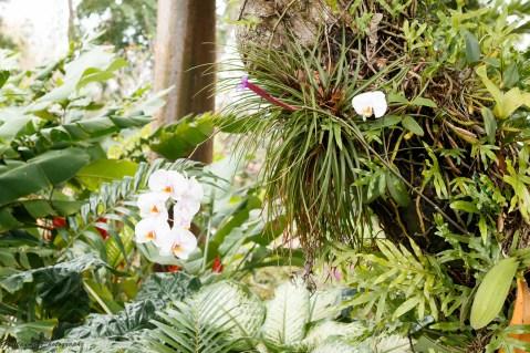 nature_Guadeloupe-2019-87