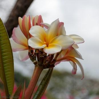 nature_Guadeloupe-2019-89