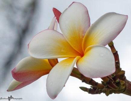 nature_Guadeloupe-2019-93
