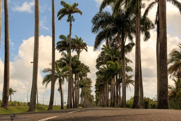 Guadeloupe-106