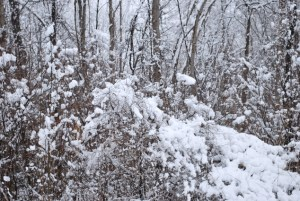 The branches of the trees were bending from the heavy snow...