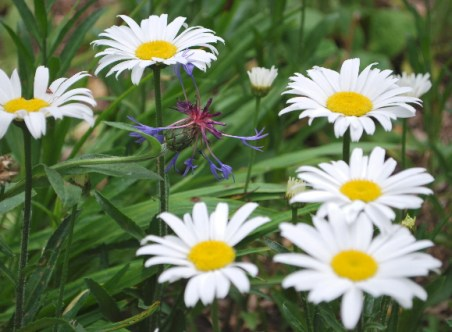 Pretty flowers... bloom everywhere in Great Grandma's Garden!