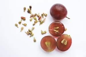 Can guinea pigs eat grapes with seeds
