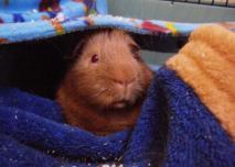 George under the hammock