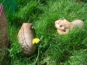 Fred and George in long grass