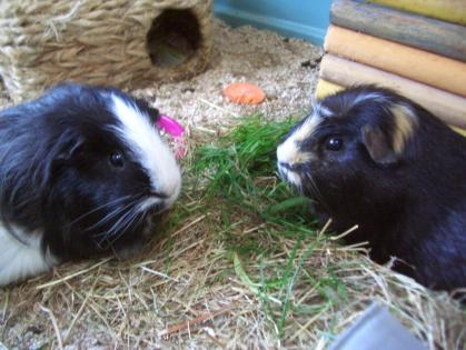 Humphrey and VHector
