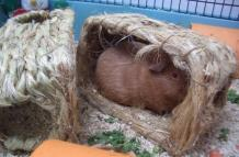 George uses the hay houses with a new view