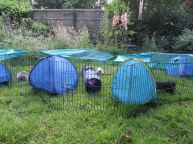 Tents and tunnels in the garden