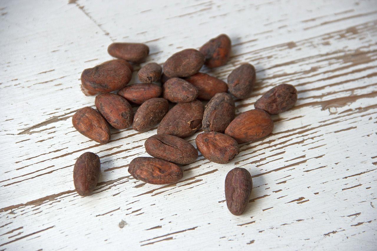 Vino de cacao: la temprana adicción al chocolate