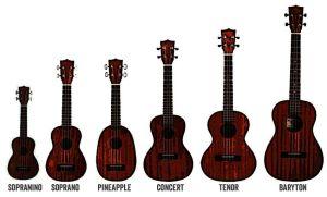 Différentes tailles des modèles d'ukulele