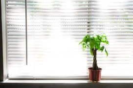 benefit of houseplants to health and happiness