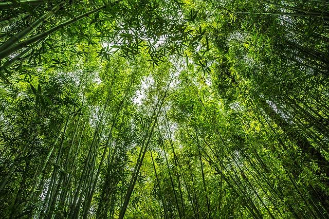 gambar-bambu