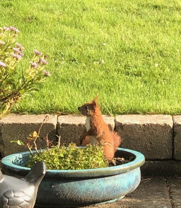 Egern på besøg