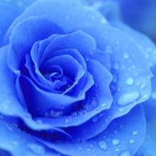gulenay pema blue