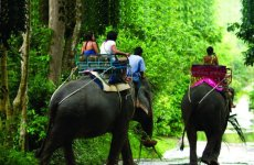 Travel Review: Ko Samui, The Island Of Plenty