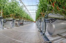 Pure Harvest plans UAE tomato farm after $1.1m Shorooq investment