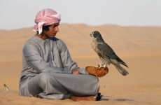 Pakistan Seizes Qatari Prince's Prized Falcons For Illegal Hunting