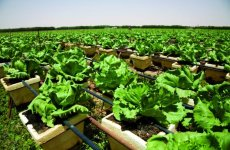 Gulf relies on imports for 90% of food