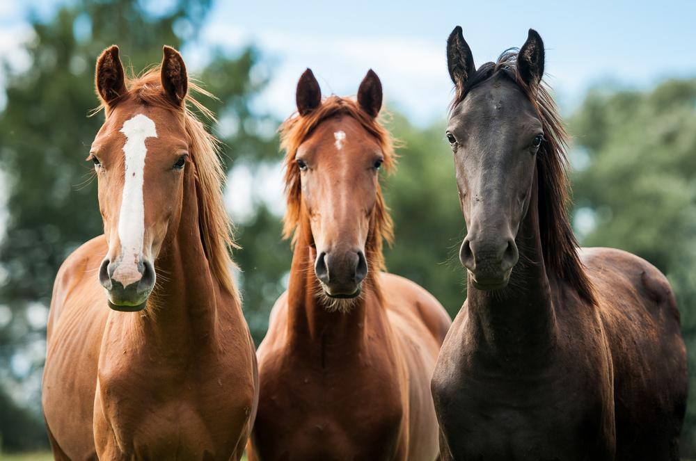 Gulf Coast Veterinary Services