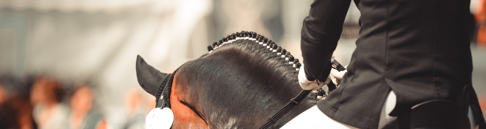 Gulf Coast Equine Veterinary Services