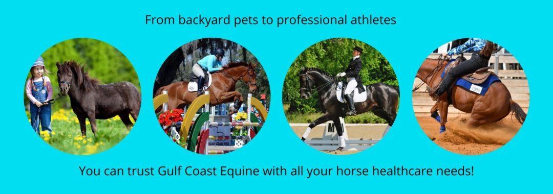 Gulf Coast Equine Veterinary Services Sarasota