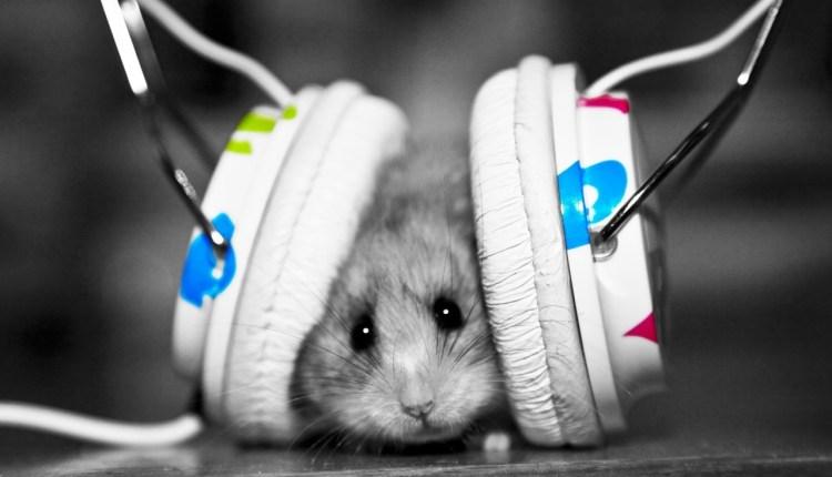Music (14)