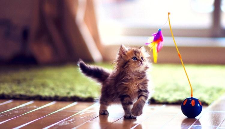cute_kitten_playing-wallpaper-1280×800