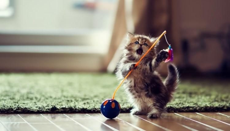 dancer_cat-wallpaper-1280×800
