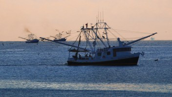 Gulf Seafood Seeks New Approach to Compete With Imports