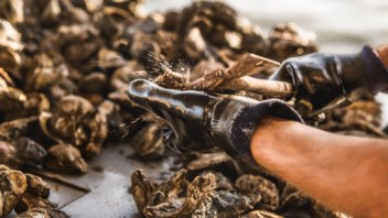Prestige Oysters Becomes First MSC Certified Oyster Fishery in the Americas