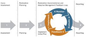 Monitoring and Adaptive Management | NOAA Gulf Spill Restoration