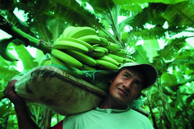bananas-equal-exchange-male