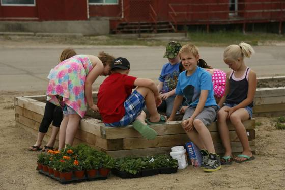 Grade 3 Class Plants Flowers at the Downtown Xeroscape Garden GULL LAKE Town Beautification  Community Communities in Bloom