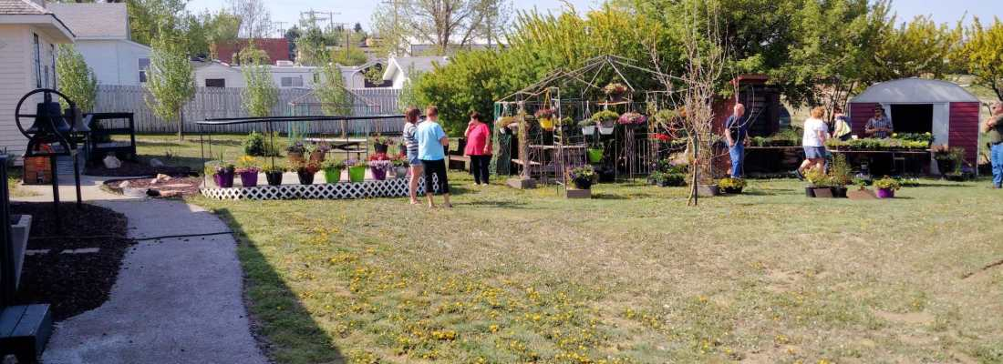 ANNUAL BEDDING PLANTS SALE AT THE GULL LAKE MUSEUM GULL LAKE Tourism  Gull Lake Museum Community