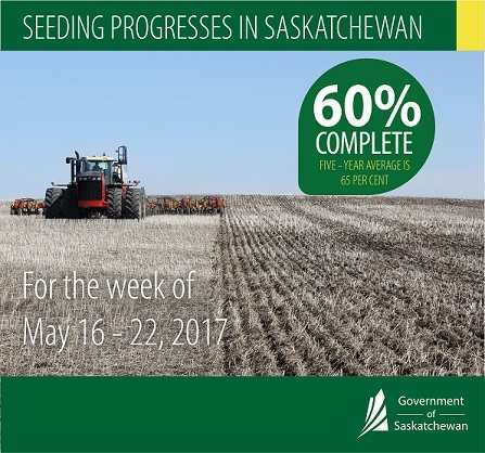Crop Report for the Period May 16 to 22, 2017 | News and Media | Government of Saskatchewan Agriculture SouthWest Saskatchewan  Crops