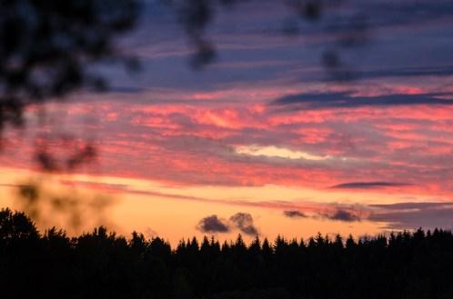 Dunkern by dusk