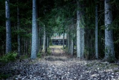 Skogens obehag
