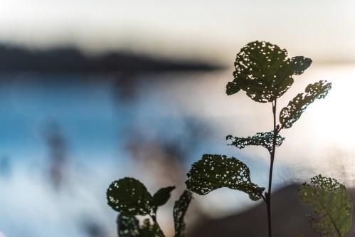 Årsta Havsbad har trasiga blad