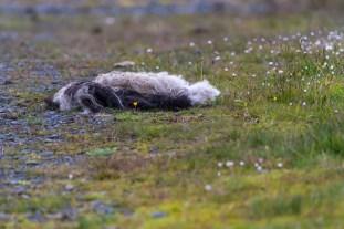 Faroe_islands_july_2017_DHK2630