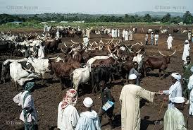 Fada: Le marché à bétail de Namoungou attaqué