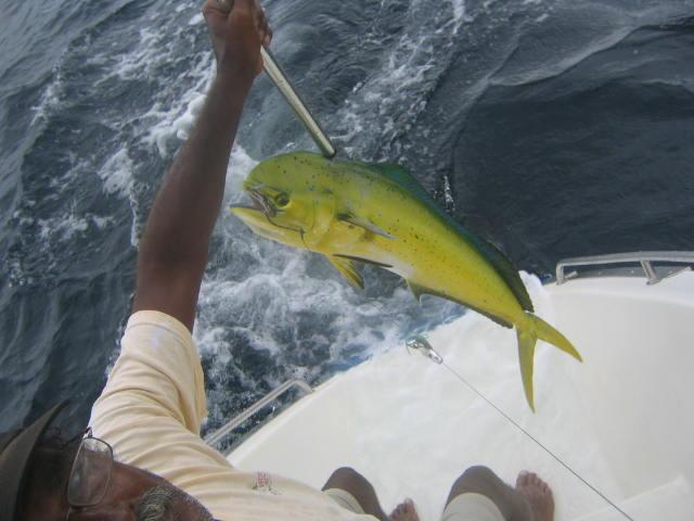 Mahi Mahi Catch