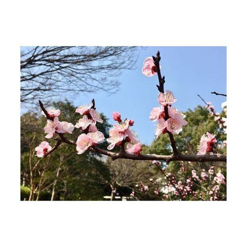 【春でぇむん】暖かくて気持ちいいね〜︎---------#春 #さくら#spring #flower #pink#ฤดูใบไม้ผลิ #青葉台マッサージ #田園都市線 #青葉台#駅近サロン#リラクゼーションサロン #gumi#タイ古式マッサージ#タイ式リフレクソロジー #タイ古式 × #アロマ#リラックス #リフレッシュ#こだわり #空間 #interior#simple #design #asian #thai#癒し #パグ #dog #pug