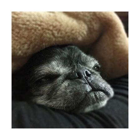 【ねむねむ〜】———#おやすみ 〜♡ねぇちゃんはこれから#体幹リセット #ダイエット やります今日からは2日に1回ペース。———#明日も仕事 #頑張ろー#癒し #パグ #黒パグ #鼻ぺちゃ#老犬 #dog #pug#かわいい #だいすき #青葉台マッサージ #田園都市線 #青葉台#駅近サロン#リラクゼーションサロン #gumi#タイ古式マッサージ#タイ式リフレクソロジー #リラックス #リフレッシュ#こだわり #空間 #interior#simple #design