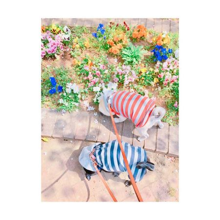 【 のんびり休日 ︎ 】    暖かくて過ごしやすいね〜———#休日 #散歩 #のんびり #パグ #黒パグ #フォーン#pug #dog #spring #flower#田園都市線 #青葉台 #駅近#リラクゼーションサロン #gumi#11周年 #タイ古式マッサージ #タイ式リフレ#タイ #好き #今すぐ行きたい #こだわり #interior #simple#self #design